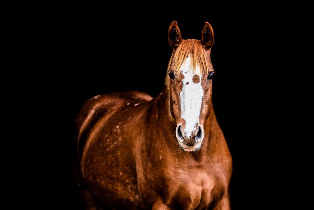 pet, equine, horse, lincolnshire, england